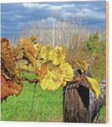 Withered Grape Vine Wood Print
