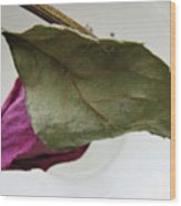 Withered Rose Wood Print