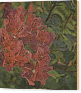 Wo-ganvillia Wood Print