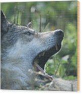 Wolf Bugged Wood Print