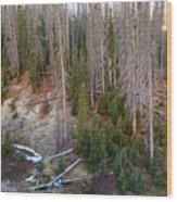 Wolf Creek Pass Forest Landscape Wood Print