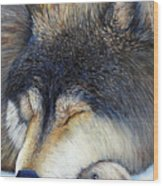 Wolf Dreams Wood Print
