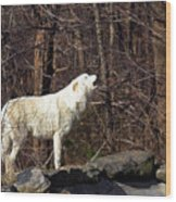 Wolf Howling In Forest Wood Print
