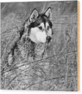 Wolf In The Grass Wood Print