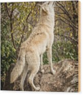 Wolf In The Woods Wood Print
