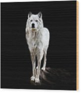 Wolf Wood Print
