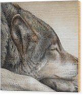 Wolf Nap Wood Print