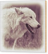 Wolf Of Yellowstone National Park Wood Print