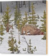 Wolf On Elk Kill Wood Print