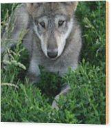 Wolf Pup Portrait Wood Print