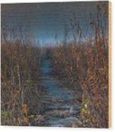 Wolf Road Prairie Trail Wood Print