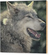 Wolf Rock Wood Print