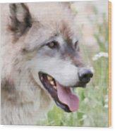 Wolf Smile Wood Print