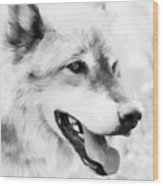 Wolf Smiling Black And White Wood Print