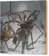 Wolf Spider Sunlight Wood Print