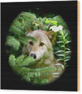 Wolf Thick Of The Woods Wood Print