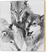 Wolf Triplets Wood Print