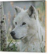 Wolf, White Wood Print