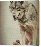 Wolf Wonder Wood Print