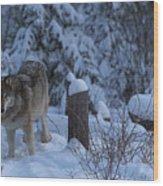 Wolf Wonderland Wood Print