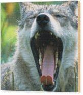 Wolf Yawn Wood Print