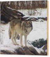 Wolfe In Winter Snow Wood Print