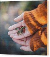 Woman Hands Holding Cranberries Wood Print
