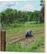 Woman Planting Garden Near Barn Wood Print