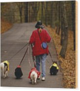 Woman Walks Her Army Of Dogs Dressed Wood Print