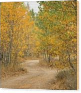 Wonder Filled Path Wood Print