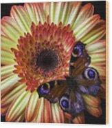 Wonderful Butterfly On Daisy Wood Print