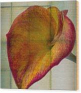 Wonderful Calla Lily Wood Print