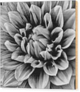 Wonderful Graphic Dahlia Wood Print
