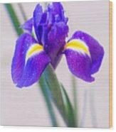 Wonderful Iris With Dew Wood Print