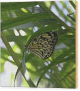 Wonderful Look At A Tree Nymph Butterfly In Foliage Wood Print