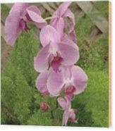 Wonderful Orchid Wood Print