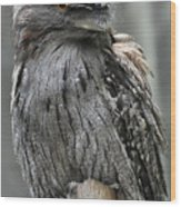 Wonderful Patterned Feathers On A Tawny Frogmouth Bird Wood Print