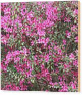 Wonderful Pink Azaleas Wood Print
