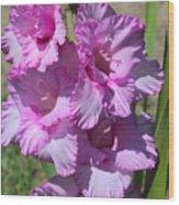 Wonderful Pink Gladiolus Wood Print