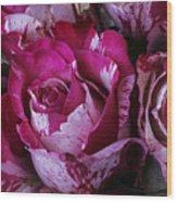Wonderful Pink Red Rose Wood Print