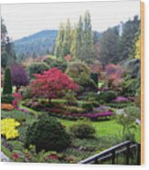 Wonderful Sunken Garden In The Butchart Gardens,victoria,canada 1. Wood Print