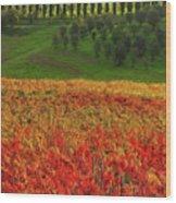 Wonderful Tuscany, Italy - 07  Wood Print