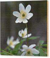 Wood Anemone  Wood Print