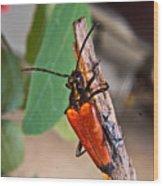 Wood Beetle Exploring Wood Print