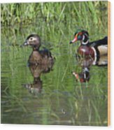 Wood Duck Couple Wood Print