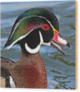 Wood Duck Drake Calling In Spring Courtship Wood Print