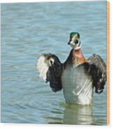 Wood Duck Flight Wood Print