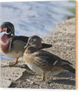 Wood Duck Pair By The Lake Wood Print