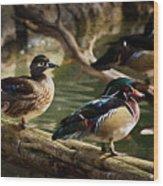 Wood Ducks Posing On A Log Wood Print