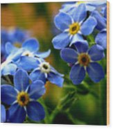 Wood Forget Me Not Blue Bunch Wood Print
